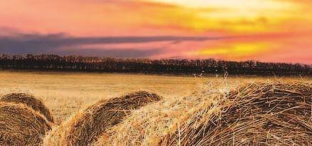 Buenas prácticas en agricultura y ganadería